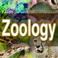 Zoology what to major in college