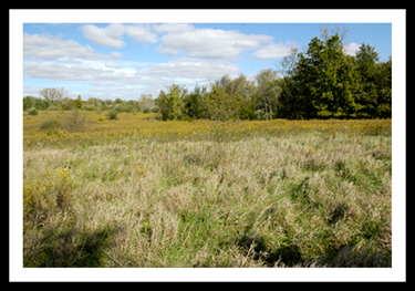 Prairie & Forest at the Fink Field Lab