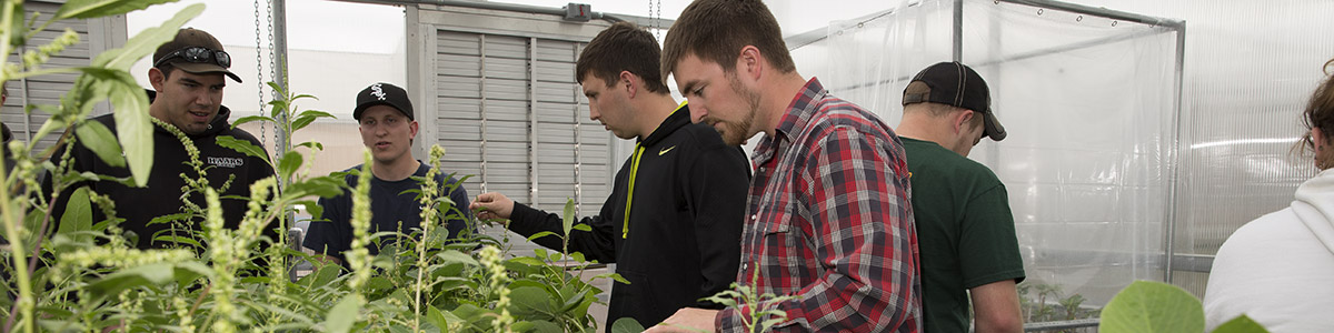 Ag students in greenhouse