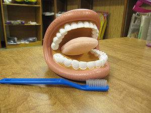 Photo of a model set of teeth and a toothbrush