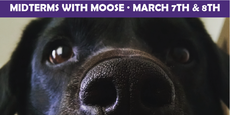Close up picture of Moose, the black labrador, with text overlay.