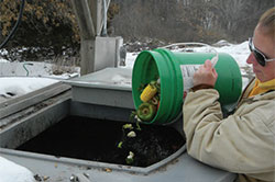 worker putting food waste in compost bin